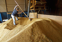 - load of the rice as soon as picked in the drier of a farm....- carico del riso appena raccolto nell'essiccatoio di una azienda agricola
