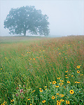Midwest Meadow in Summer