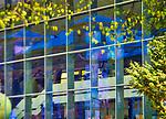 Odbicie Starego Domu Zdrojowego w oknach Pijalni  Gł&oacute;wnej<br /> przy Deptaku w centrum Krynicy.