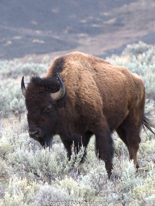 Photos from Yellowstone Park
