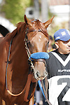 Capo Bastone walking into the paddock at Del Mar Race Course in Del Mar, California on August 4, 2012.