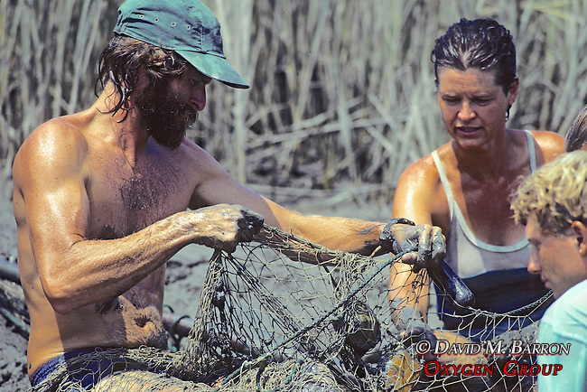Tony Tucker, Heather O'Conner and Tim Removing Terrapin Turtles From Nets