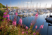 John Wayne Marina harbor with fireweed. Washington