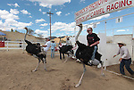 From left, Adam Gaudette, Elizabeth Dickey and Daniel Jacobsen race on ostriches during media day at the International Camel Races in Virginia City, Nev., on Friday afternoon, Sept. 7, 2012. The 53rd annual event continues Saturday at 1 p.m. and at noon on Sunday..Photo by Cathleen Allison