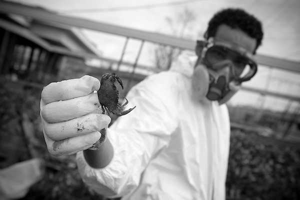 During a home cleaning a crab is found, washed in from the canal in the flooding that devastated the neighborhood.. Due to the overwhelming lack of services provided to those residents, almost all African American,  of the hard hit Lower 9th Ward of New Orleans, Common Ground Relief was started by community activists to provide basic medical services as well as food, water and cleaning supplies to any resident in need. Volunteers have come from all over the country to offer a hand to these in need residents..