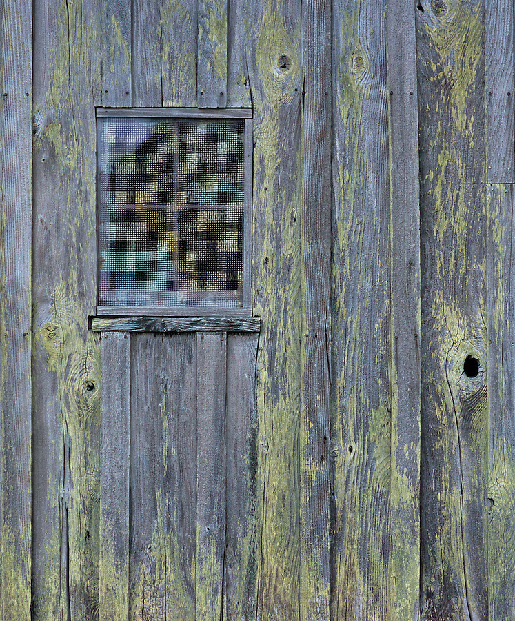 An old boathouse in Bush Point on Whidbey Island, Washington is covered in light-green lichen.