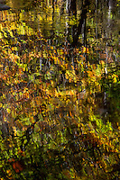 Fall reflections in the Ouachita National Forest in Arkansas.