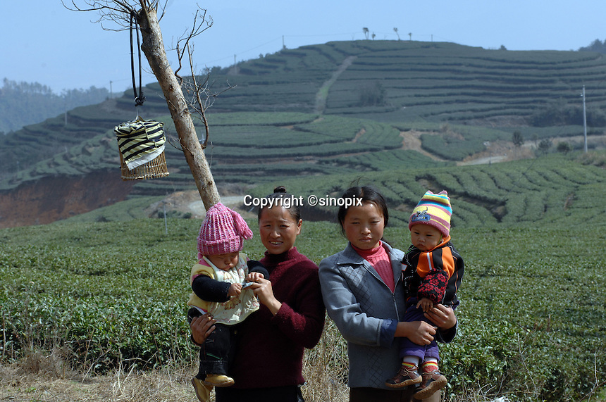 "Mothers, whose was babies were born at the at The Tian Hu (Sky Lake) Tea Farm in the mountains outside Fuding City, Fujian Province where ""Silver Tip"" tea is produced.  Workers here are paid around 53 pounds a month during harvest season, they work ten hour days, seven days a week and the women work with the children strapped to their backs. The tea sells for upto 20 pounds a pot in the UK."