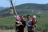 """Mothers, whose was babies were born at the at The Tian Hu (Sky Lake) Tea Farm in the mountains outside Fuding City, Fujian Province where """"Silver Tip"""" tea is produced.  Workers here are paid around 53 pounds a month during harvest season, they work ten hour days, seven days a week and the women work with the children strapped to their backs. The tea sells for upto 20 pounds a pot in the UK."""