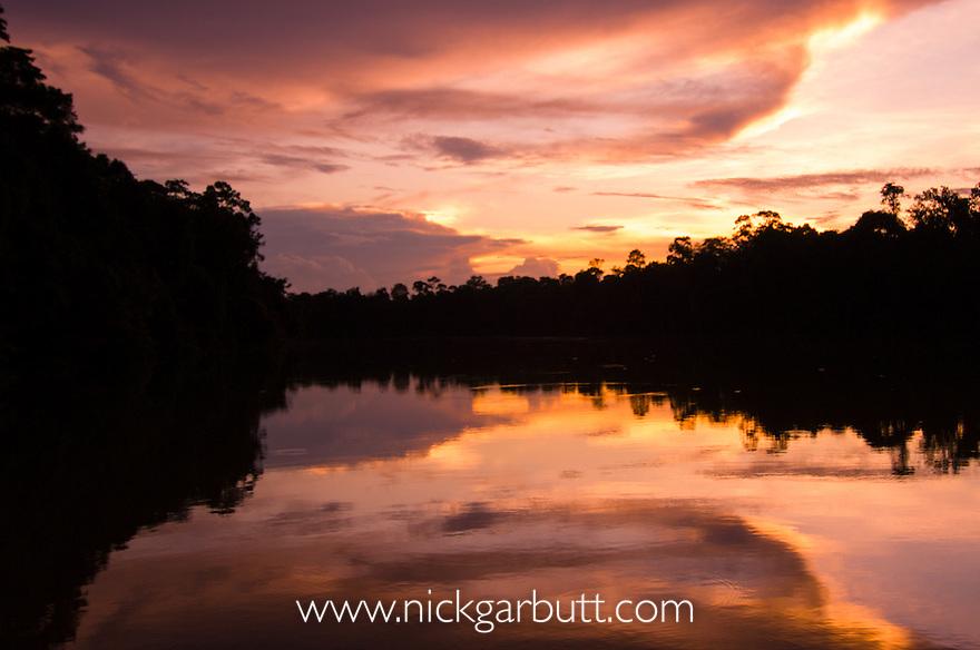 Sun set over riverine rainforest. Kinabatangan River, Sabah, Borneo.