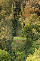 Le Domaine du Rayol:<br /> le grand escalier et la pergola. Dans le creux, les foug&egrave;res arborescentes du jardin de Nouvelle-Z&eacute;lande.