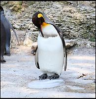 Birdland keep their penguins happy feet in heatwave.