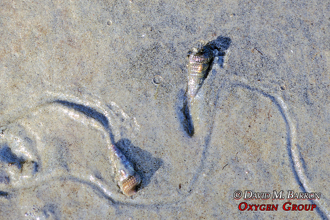 Snails & Their Trails
