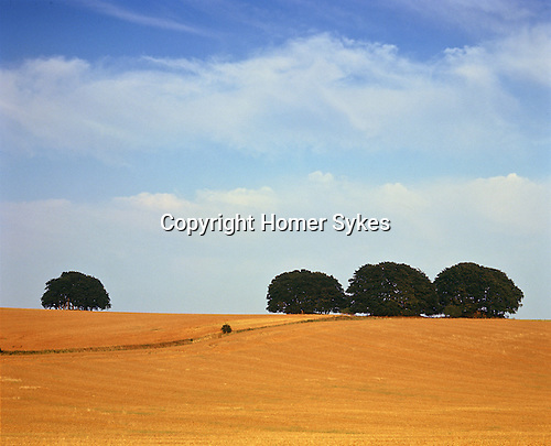 Four Round Barrows. The Ridgeway, Nr Avebury, Wiltshire, England. Celtic Britain published by Orion. Round Barrows are burial sites that date from the Bronze Age period Trees have grown up over the Round Barrows.