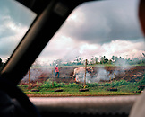 FIJI, Northern Lau Islands, view through a taxi window of a farmer and his cow working a field