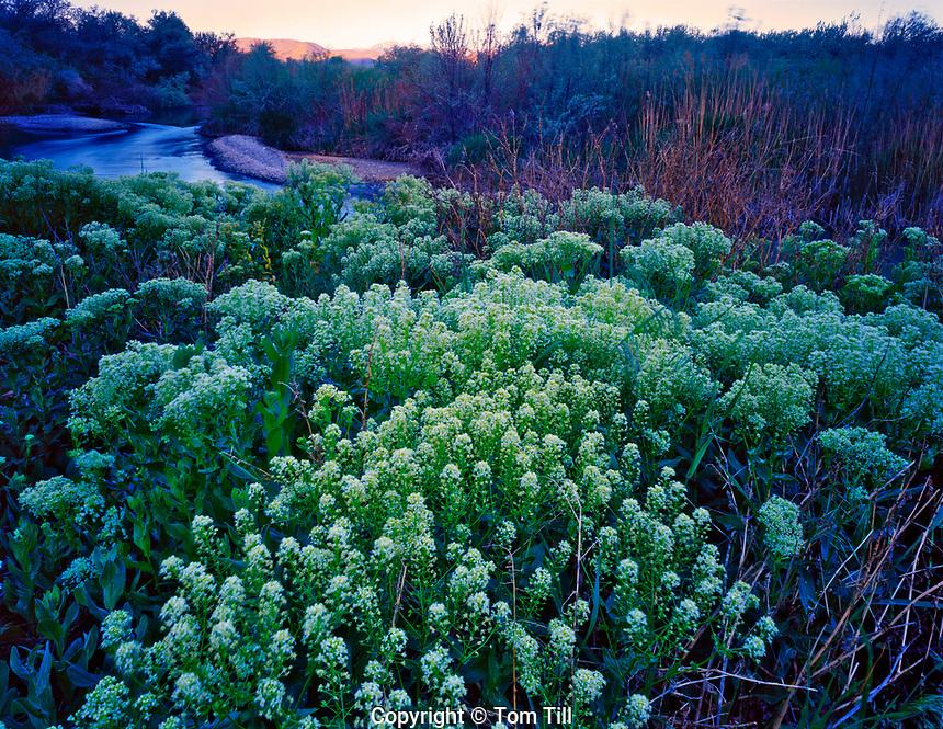 Sunrise along the Jordon River, Galena Property - Utah Open Lands, Salt Lake City, Utah