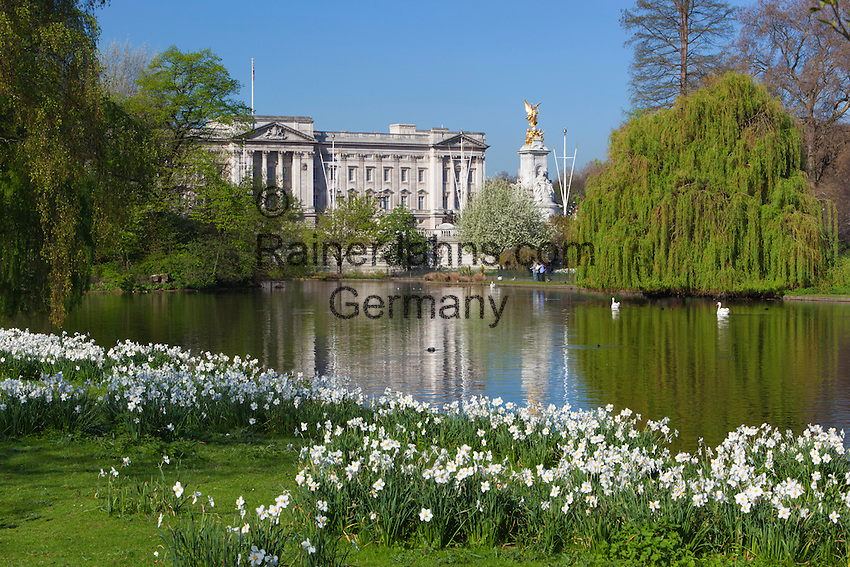 Great Britain, England, London: Buckingham Palace from across St James's Park Lake with Spring Daffodils, gold plated Victory atop the Queen Victoria Memorial | Grossbritannien, England, London: Buckingham Palast und Saint James's Park im Fruehling mit weissen Narzissen, vergoldete Victory Statue auf dem Queen Victoria Memorial