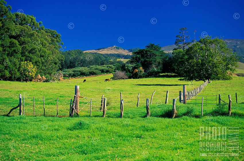 A field in the Kula area of Maui