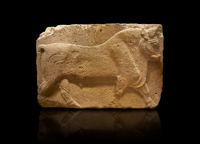 Phrygian relief sculpted orthostat stone panel, 1200-700 B.C. Anatolian Civilisations Museum, Ankara, Turkey. Figure of a walking bull.<br /> <br /> Against a black background.