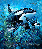 Steven-Michael, REALISTIC ANIMALS, REALISTISCHE TIERE, ANIMALES REALISTICOS, paintings+++++,USMG112,#a#, EVERYDAY ,puzzles,maritime,underwater,orcas, killer wales