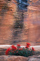 Slickrock paintbrush along Pine Creek<br />