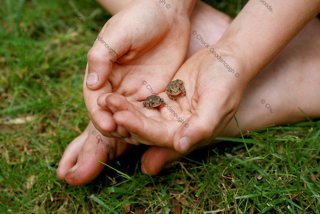 Photo of a pair of cute baby Toads in a little boys hands.
