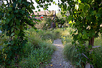 Path through meadow garden with grasses and perennials,  arbor covered by grape vine in Barbata backyard garden, Walnut Creek, California