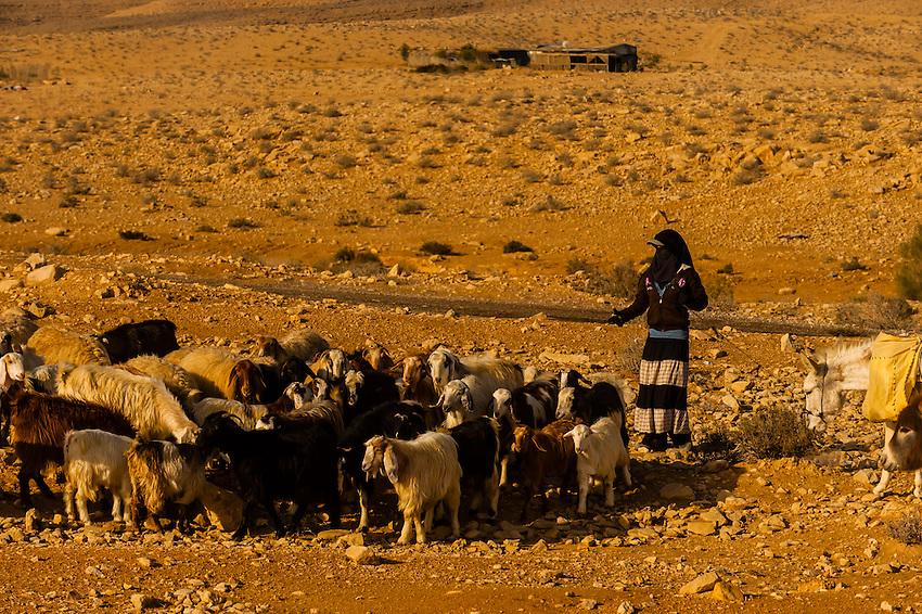 A young Bedouin woman herds her goats, Negev Desert, Israel.
