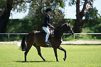Champion Child's Large Pony