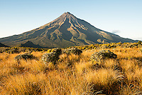 Morning views of Taranaki with field of alpine plants, Mt. Egmont, Egmont National Park, North Island, New Zealand, NZ