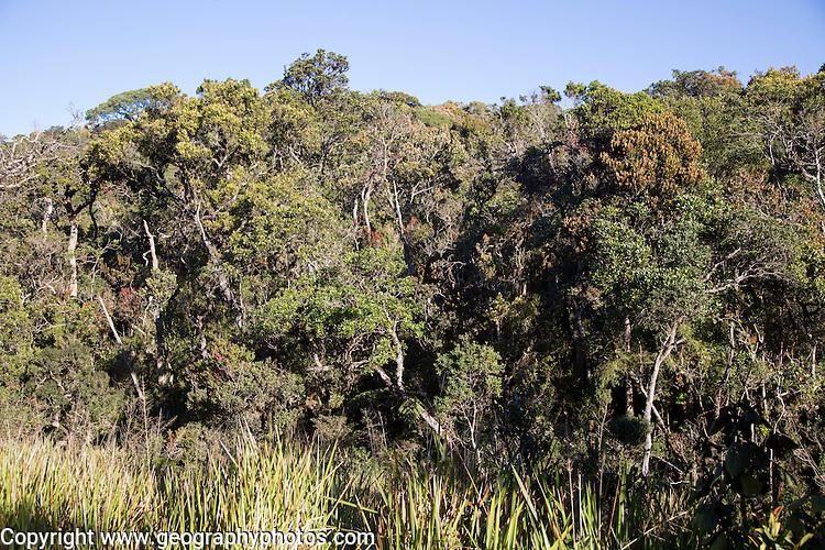 Cloud forest environment Horton Plains national park, Sri Lanka, Asia