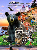Howard, REALISTIC ANIMALS, REALISTISCHE TIERE, ANIMALES REALISTICOS, paintings+++++,GBHRPROV111V,#a#, EVERYDAY ,National Parks ,puzzles