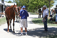 Hip #111 A.P. Indy - Lady Lochinvar colt being inspected by trainer Bob Baffert at the  Keeneland September Yearling Sale.  September 9, 2012.