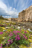 Dwarf fireweed along the Ukak River carved through ash from the 1912 Novarupta volcano eruption. Valley of ten thousand smokes, Katmai National Park, Alaska.
