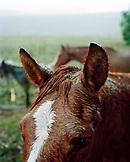 USA, California, close-up of a horse head in the rain, Hwy 1, Bolinas