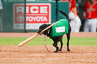 """Miss Lou-Lou Gehrig"" performs her duties as bat dog during the South Atlantic League game between the Augusta GreenJackets and the Greensboro Grasshoppers at NewBridge Bank Park on August 11, 2013 in Greensboro, North Carolina.  The GreenJackets defeated the Grasshoppers 6-5 in game one of a double-header.  (Brian Westerholt/Four Seam Images)"