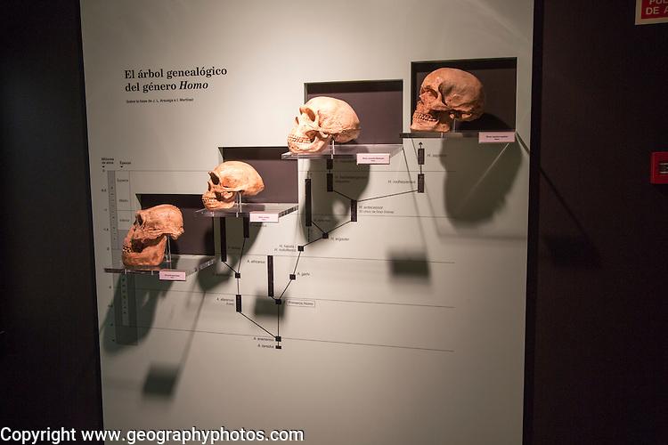 Evolution of Homo Sapiens archaeology museum, Jerez de la Frontera, Cadiz Province, Spain