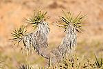 Shimmering Sky-Mojave National Preserve