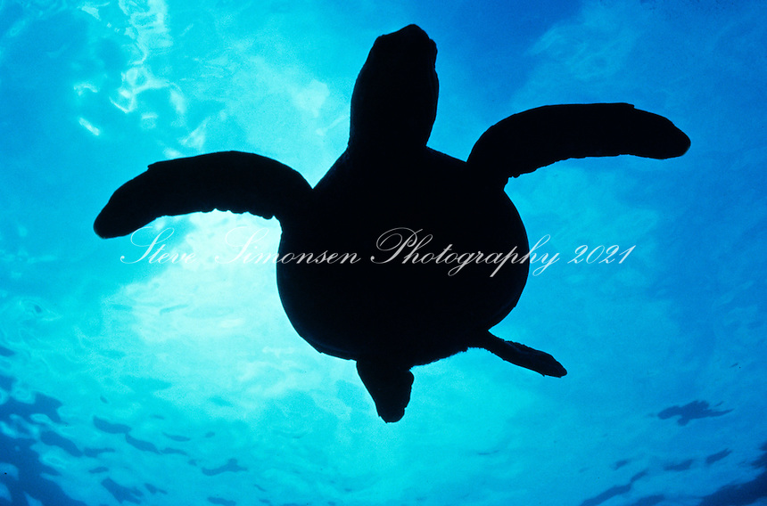 Turtle silhouette<br /> U.S. Virgin Islands