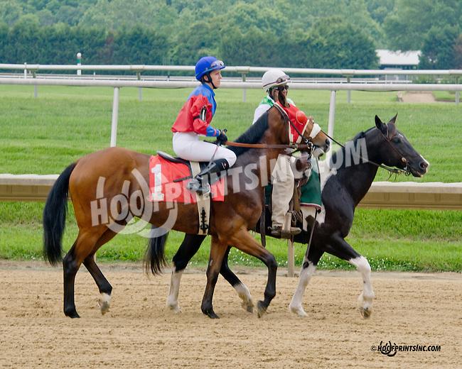Cherokee Creek with Radka Hradcova before The International Ladies Fegentri  at Delaware Park racetrack on 6/9/14