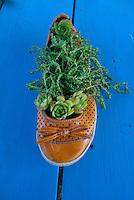 Orange shoe filled with growing sedum, Yarmouth ME