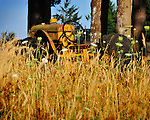 An abandoned Minneapolis Moline tractor in tall grasses