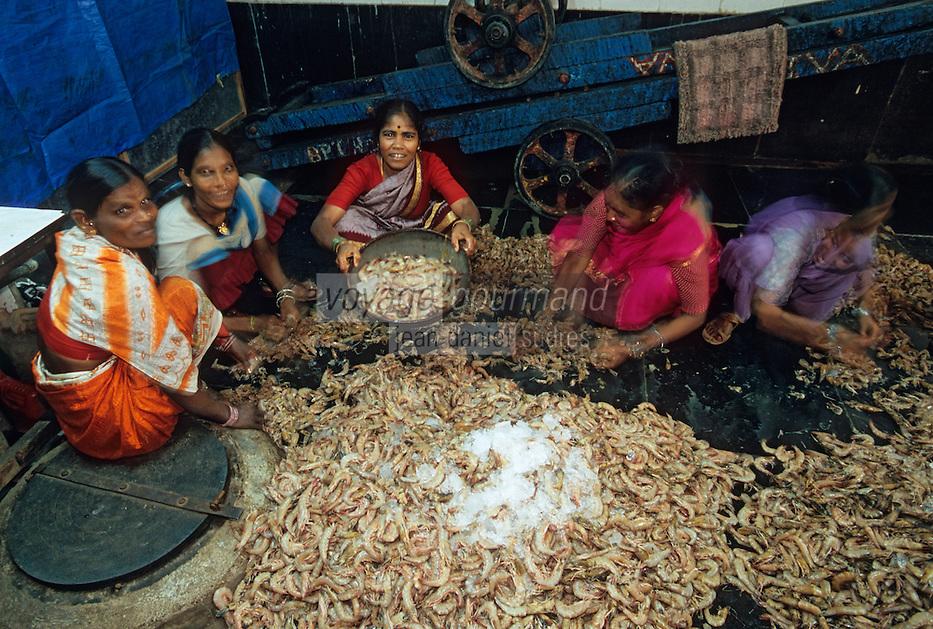 Asie/Inde/Maharashtra/Bombay: Sassoon Docks - Le marché aux poissons - Eplucheuses de crevettes