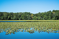 Smithville Lake, Smithville, Burlington County, New Jersey, USA