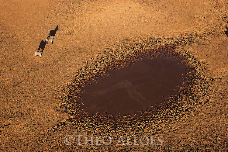 Namibia, Namib Desert, Namibrand Nature Reserve, aerial zebras  (Equus burchelli) near natural water hole