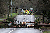 WEATHER PICTURE WALES<br /> Pictured: Police have closed access so that council workers remove trees that have fallen on Mayals Road in Mumbles, south Wales. Wednesday 12 February 2014<br /> Re: 100mph winds have been forecast with severe flood warnings issued for many parts of the UK.