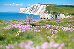 2019-05-21 - Freshwater Bay Sea Pinks