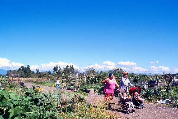 5th Annual Garlic Festival, August 2013 (hosted by The Sharing Farm) at Terra Nova Rural Park, Richmond, BC, British Columbia, Canada - Garlic Lovers stroll through Terra Nova Community Garden
