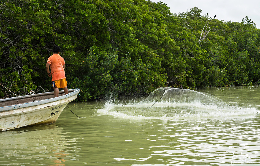A fisherman casts his net into the brackish waters of the marine estuary at the Ria Lagartos Biosphere Reserve, a UNESCO World Biosphere Reserve in Yucatan, Mexico.  A Common Black Hawk watches from a nearby tree at right.