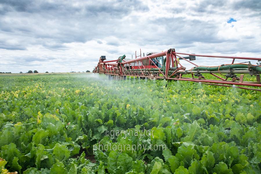 Spraying sugar beet with fungacide